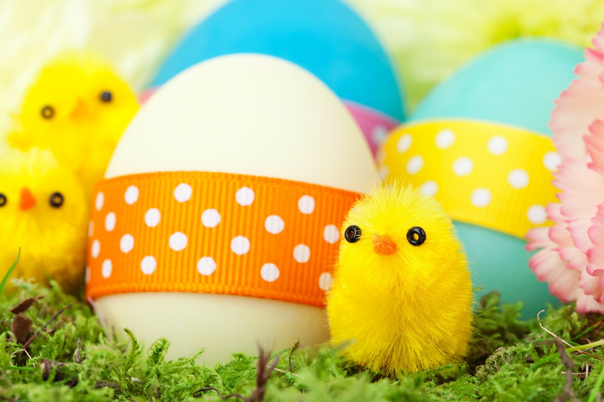 TOP EASTER FAMILY FUN ATTRACTIONS AND EVENTS IN NORTH DEVON!