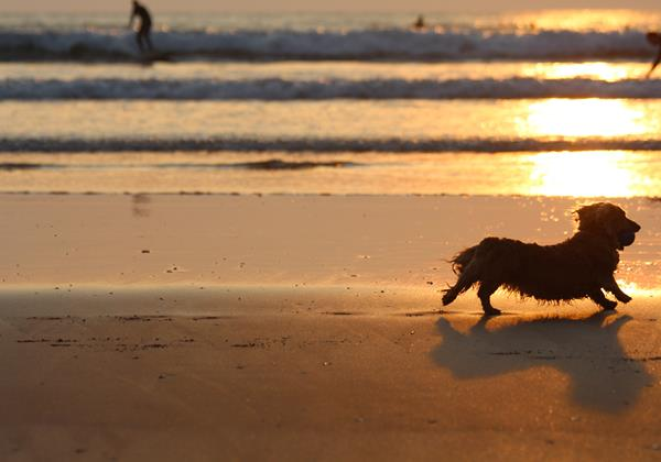 dogs website image