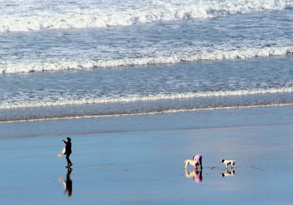 Woolacombe Beach Ocean Cottages Pet Friendly Holidays