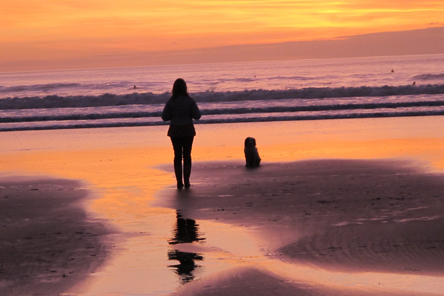 NORTH DEVON'S DOG FRIENDLY BEACHES YOU CAN VISIT THIS AUTUMN/WINTER
