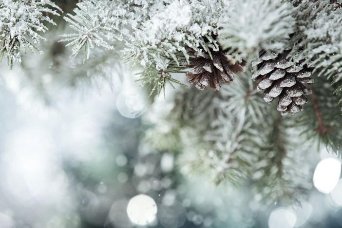 Fir Cones Christmas