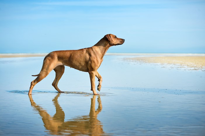 Dog Picture Ocean Cottages