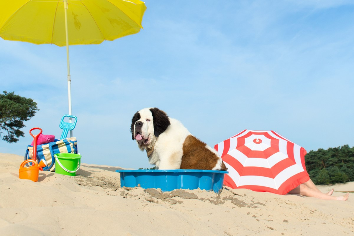 Dog On Holiday1